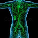 Lymphsystem Bild